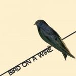 birdonawirelarge